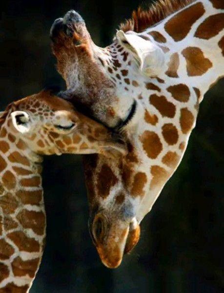 Újszülött zsiráf és anyukája kreatív gyémántkirakó készlet