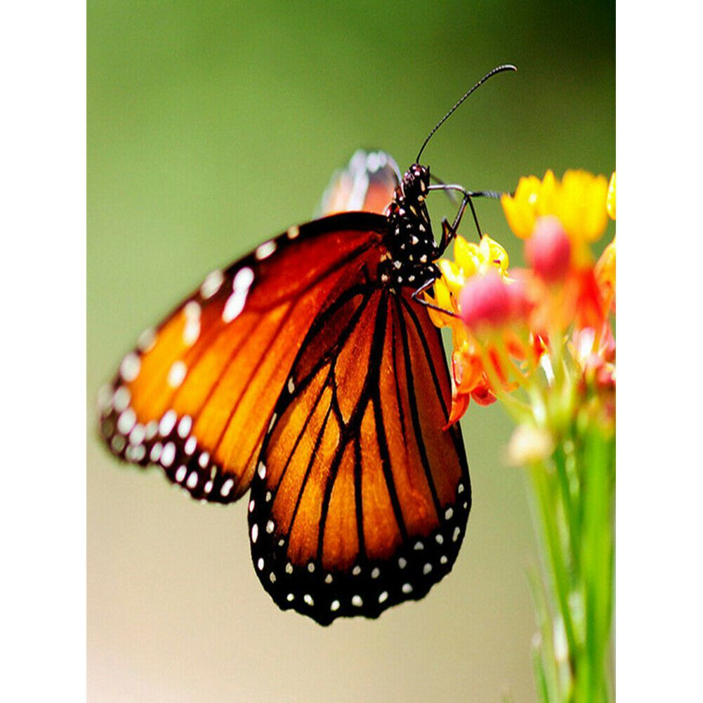 Narancssárga pillangó kreatív gyémántkirakó készlet