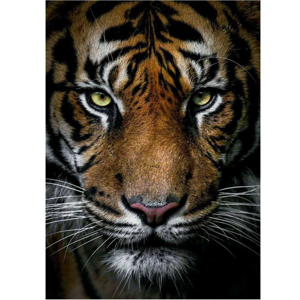Tigris fekete színvilág kreatív gyémántkirakó készlet