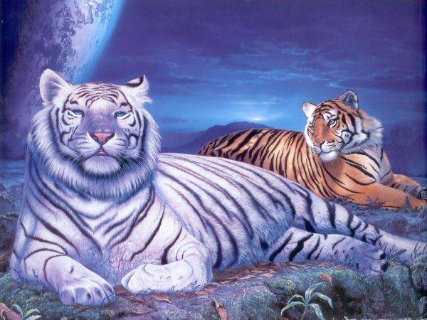 Fehér és barna tigrisek kreatív gyémánt kirakó készlet