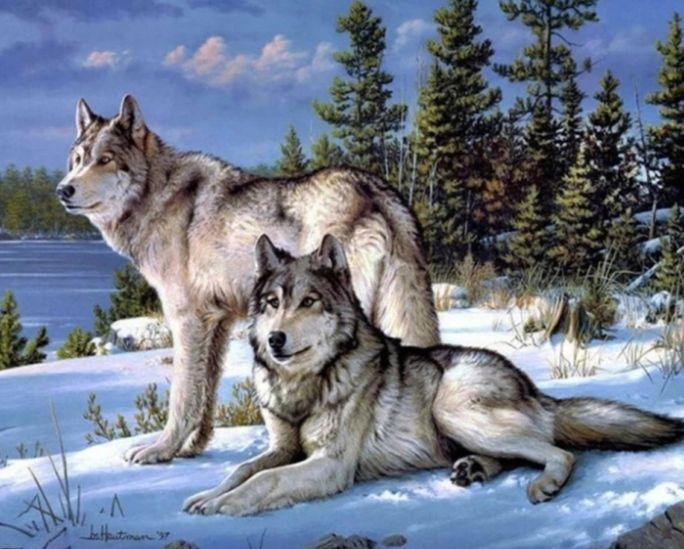 Két farkas a havas tájban kreatív gyémánt kirakó készlet