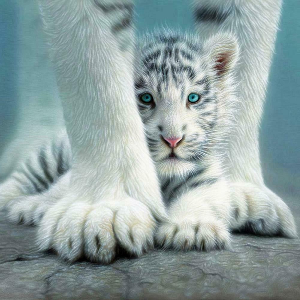 Két fehér tigris tappancsokkal kreatív gyémántkirakó készlet